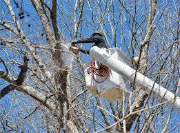 remove-trees